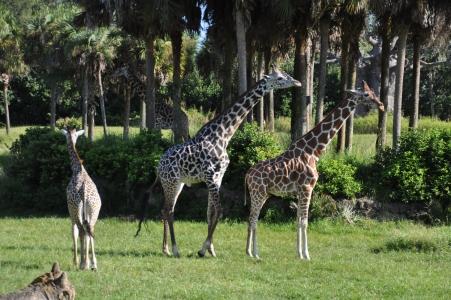 Animal Kingdom Feeding