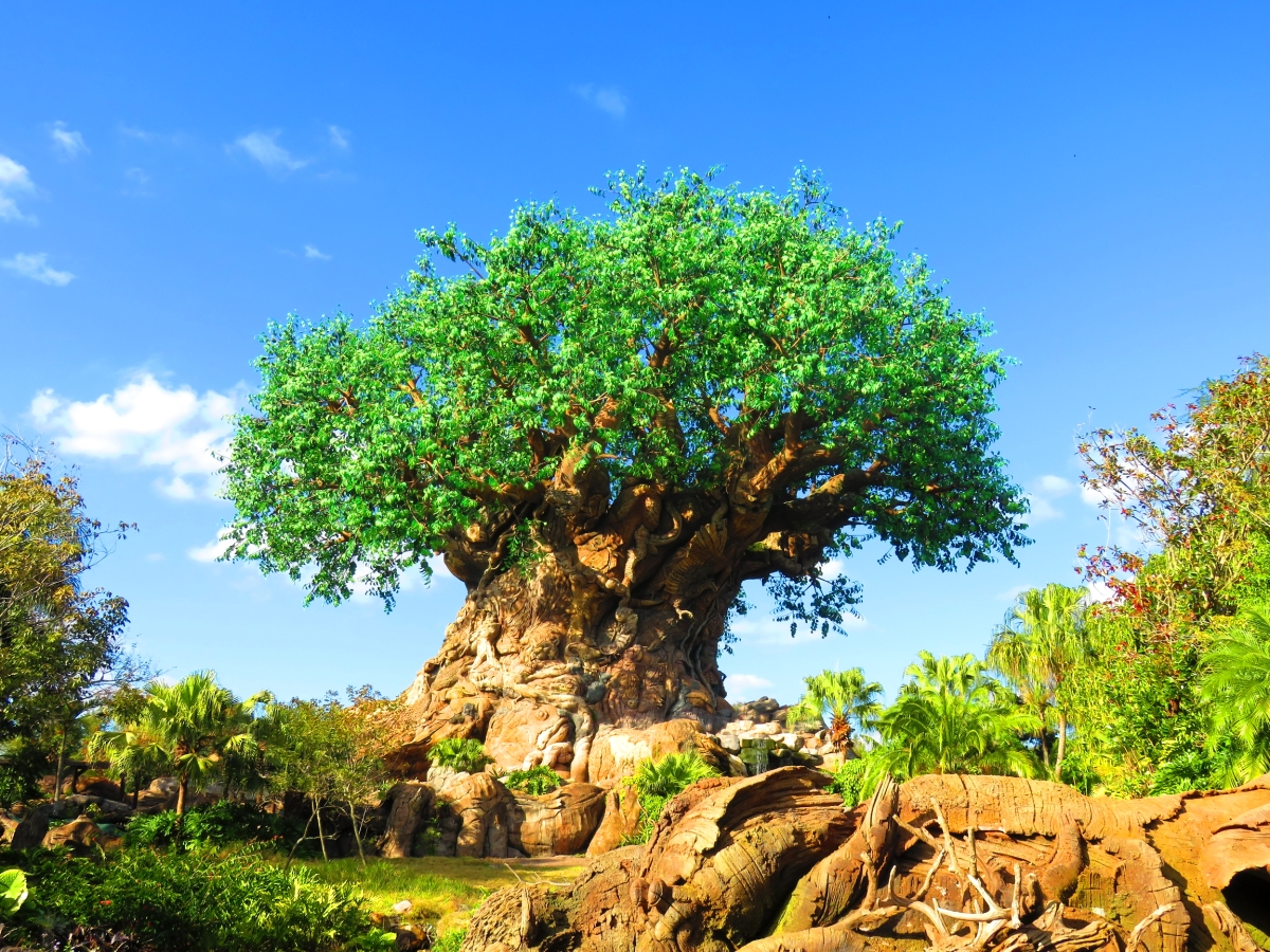 WDWThemeParks com   Animal Kingdom Animal Kingdom  The Tree of Life