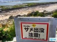 沖縄サメ出没
