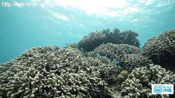 イノー珊瑚4