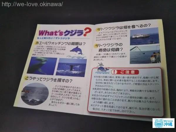 whalewatching-panf