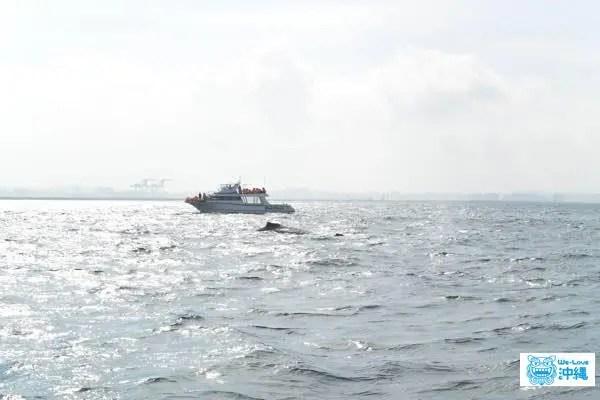 whalewatching-tsuisou