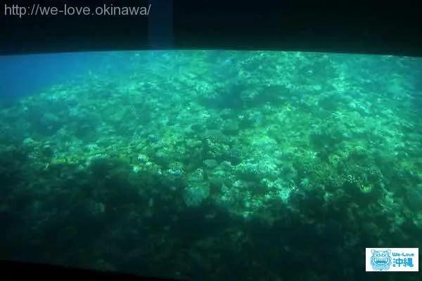 那覇港サンゴ礁