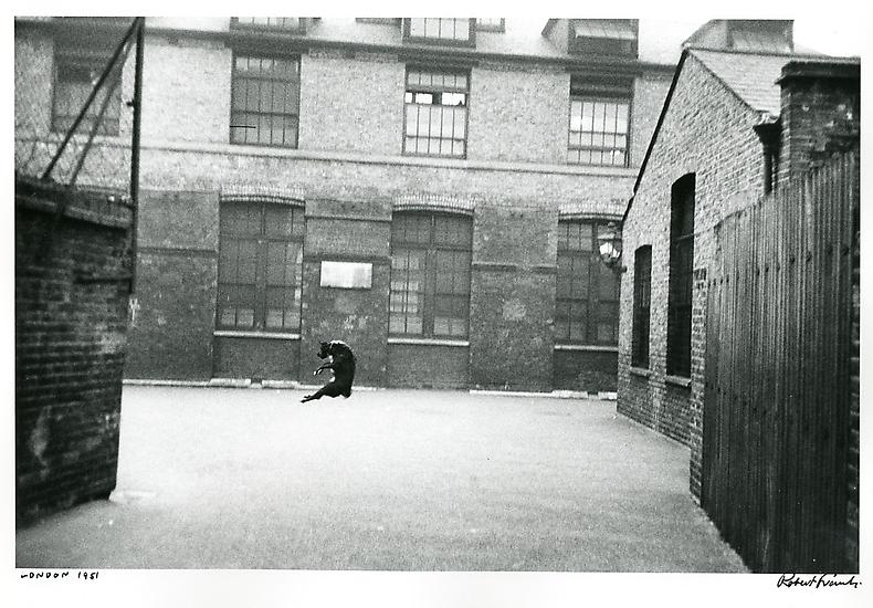 London_dogjumping1951_0340