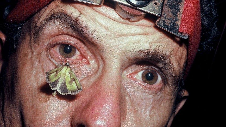DeepJungle-Moth