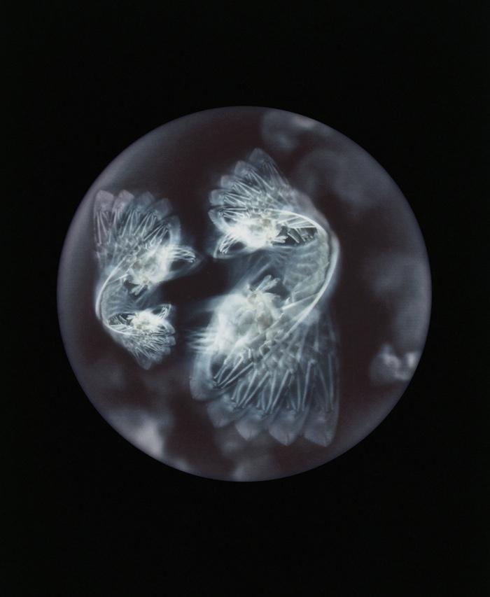 Plastic plankton, the Anthropocene?s emblematic ?microorganism?