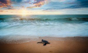 animal-beach-blur-1817048