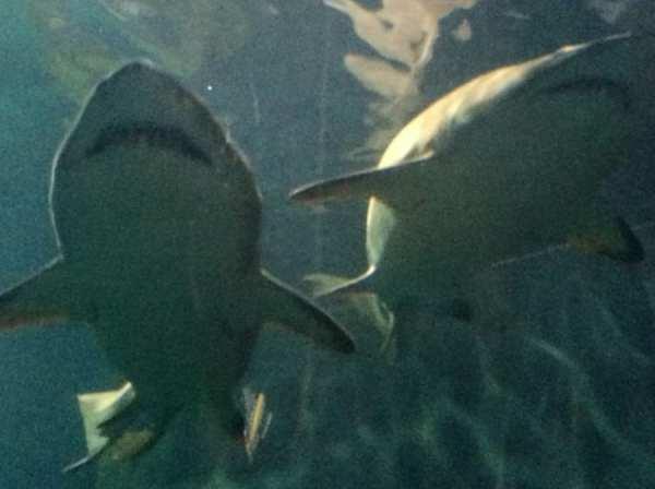 Exploring Adventure Aquarium In Camden Nj