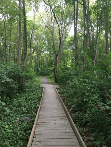 Hiking trails on the Norman Bird Sanctuary