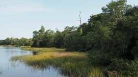 Airlie Gardens Bradley Creek