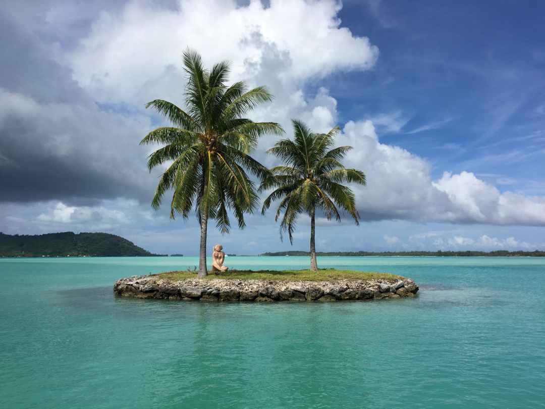coconut trees planted on island