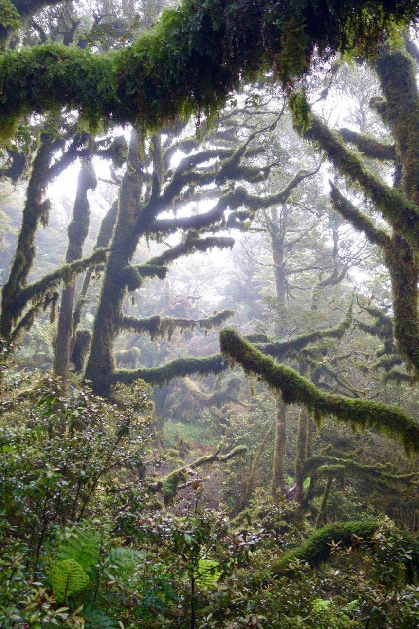 Te Araroa trail passes through the misty, mossy forests of the Tararua Range. Photo / Laura Waters