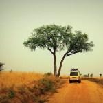 природный парк Крюгер в ЮАР