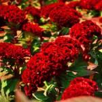 Цветник в ботаническом саду
