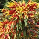 Цветник ботанического сада