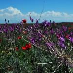 весенняя цветущая степь Казахстана