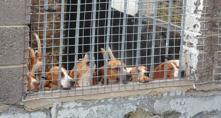 Beagles, above Westgate