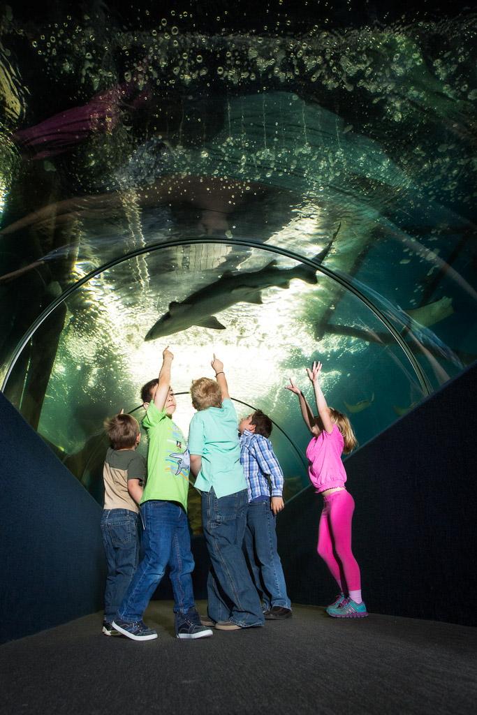 94-aquarium2