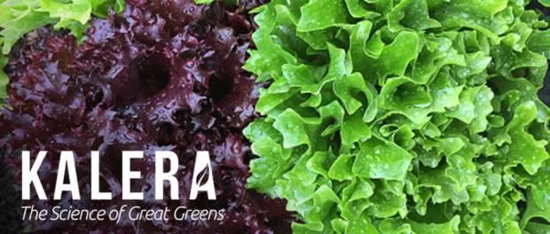 Kalera - growing lettuce