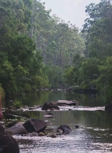 Escape From The Urban // Blackheath To Acacia Flat (NSW), Matt n Kat Pearce, Kat and forest, river, creek, looking, gazing