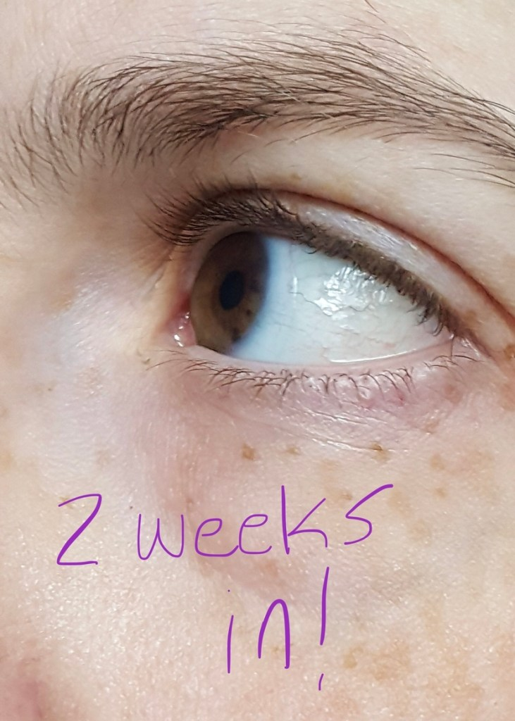 Natural lashes 2 weeks after starting use of Chantecaille Longest Lash Mascara