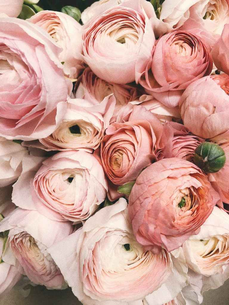 Group of peonies - beauty inspiration