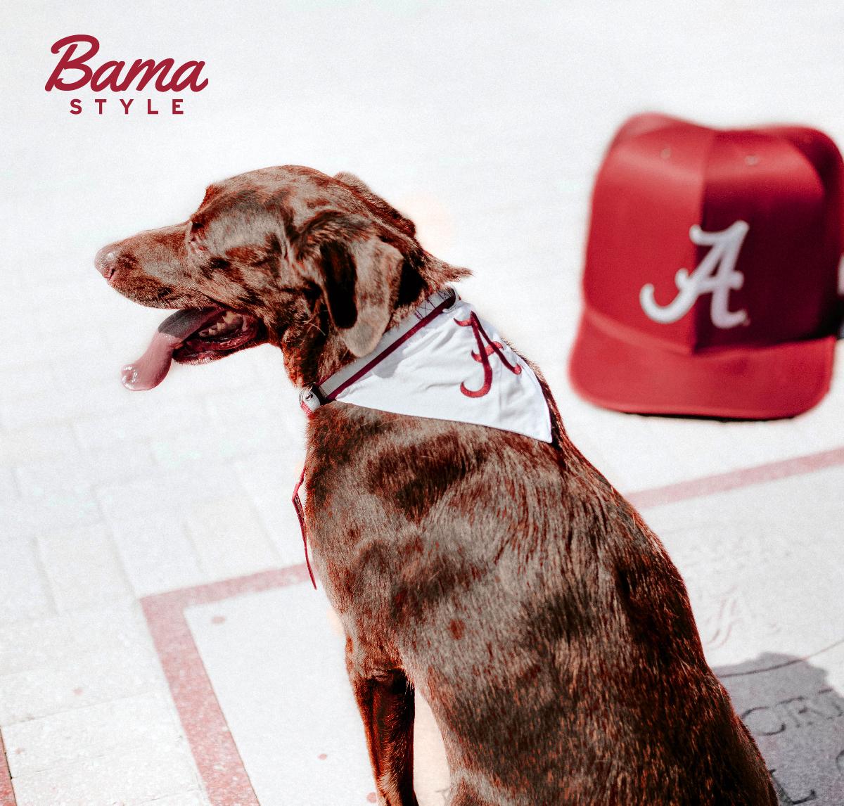 Social 4 - Bama Style Pups