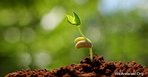 Seed of Israel, Benai, Beni, Sons of Israel