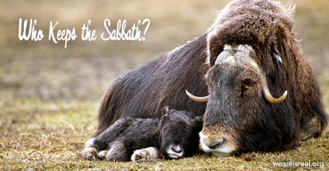 keep the Sabbath