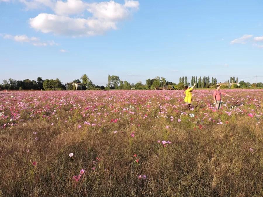 St Emilion: vino e fiori d'autunno per un weekend romantico
