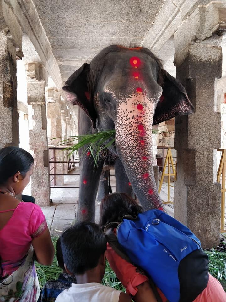 elefante sacro al Sri Virupakshana Temple di Hampi