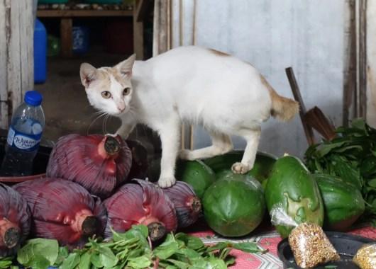 un gatto si aggira per il lapaz market a ilo-ilo nelle filippine