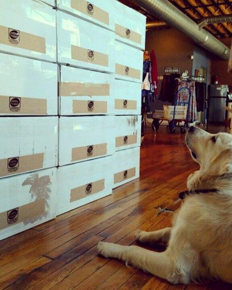 INSTA Lo Hurricane Harvey Donation Boxes 2