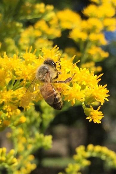 INSTA Bee REVISED.jpg