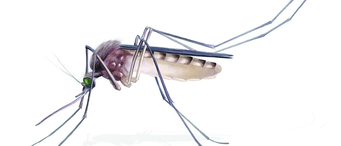 Growing Prosper – It is that Time of Year Again!! Let's talk about Mosquitoes.