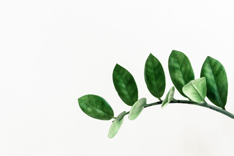 Green leaves in a white background