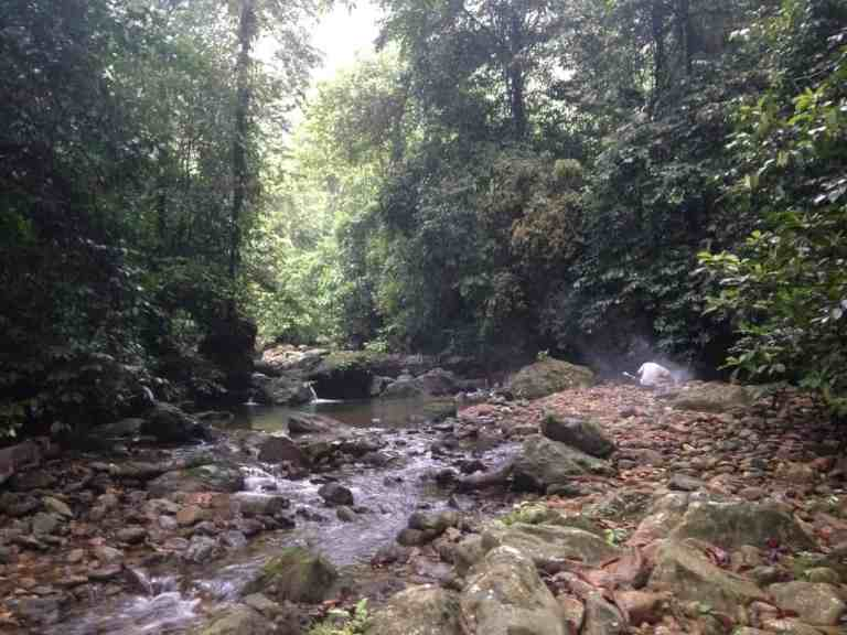 Batu Katak Jungle River