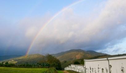 Dubbele regenboog boven een groen landschap