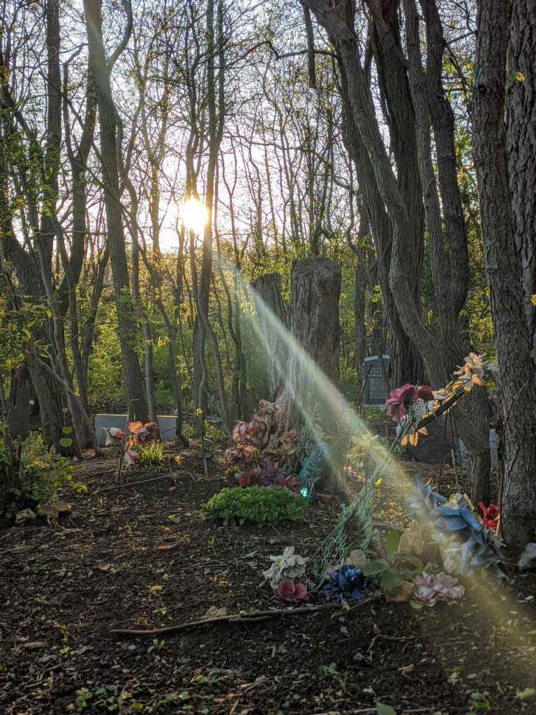 Sunrays shining into the Methodist Episcopal Cemetery.