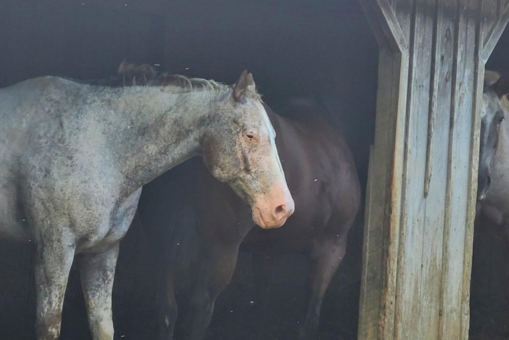 Crockett, one of Gina Franklyn's rescue horses.