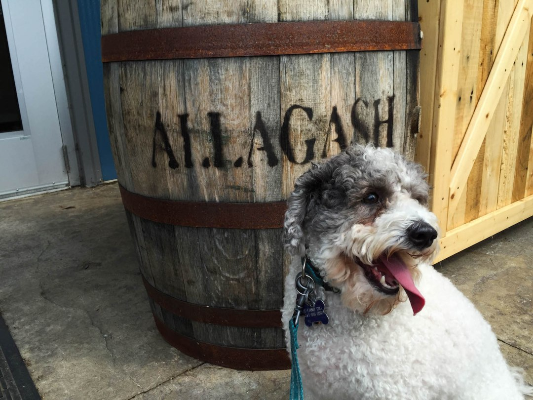 Allagash Brewery Dog Friendly