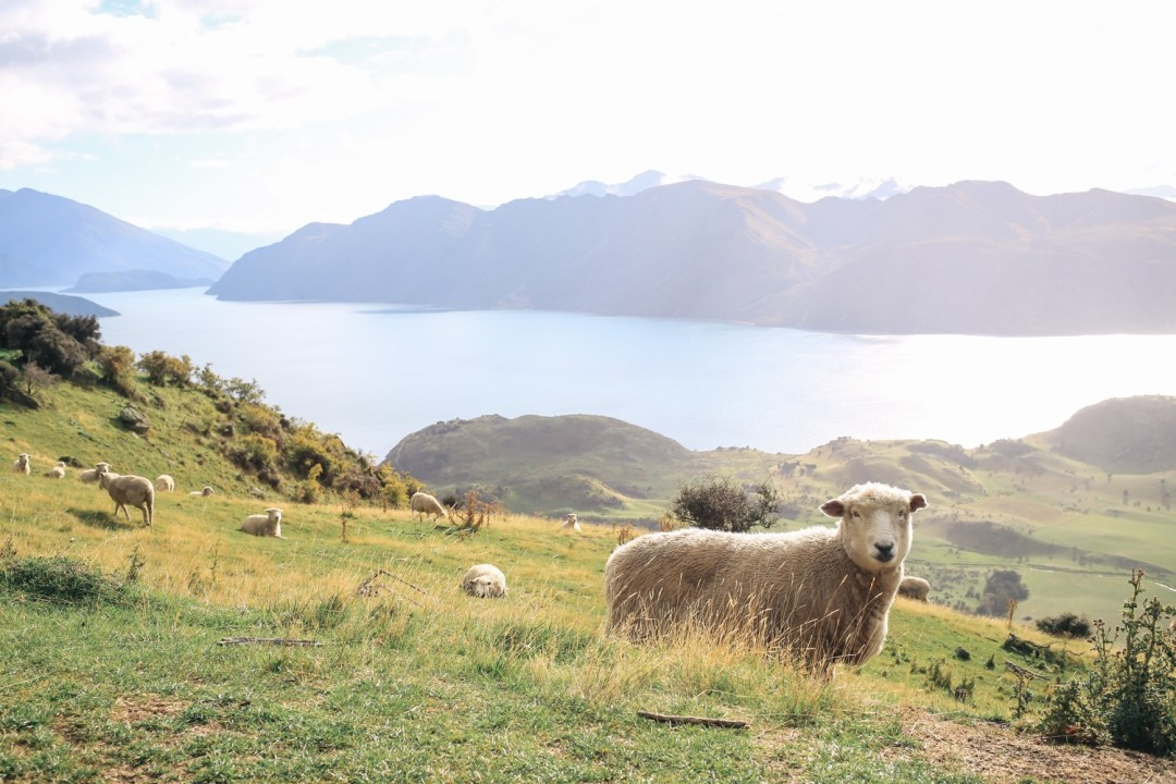 Finding Myself In New Zealand