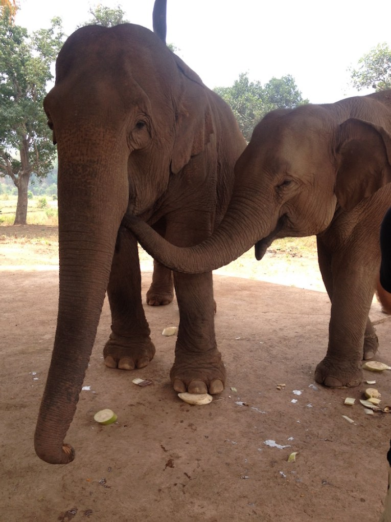 myanmar-baby-elephant