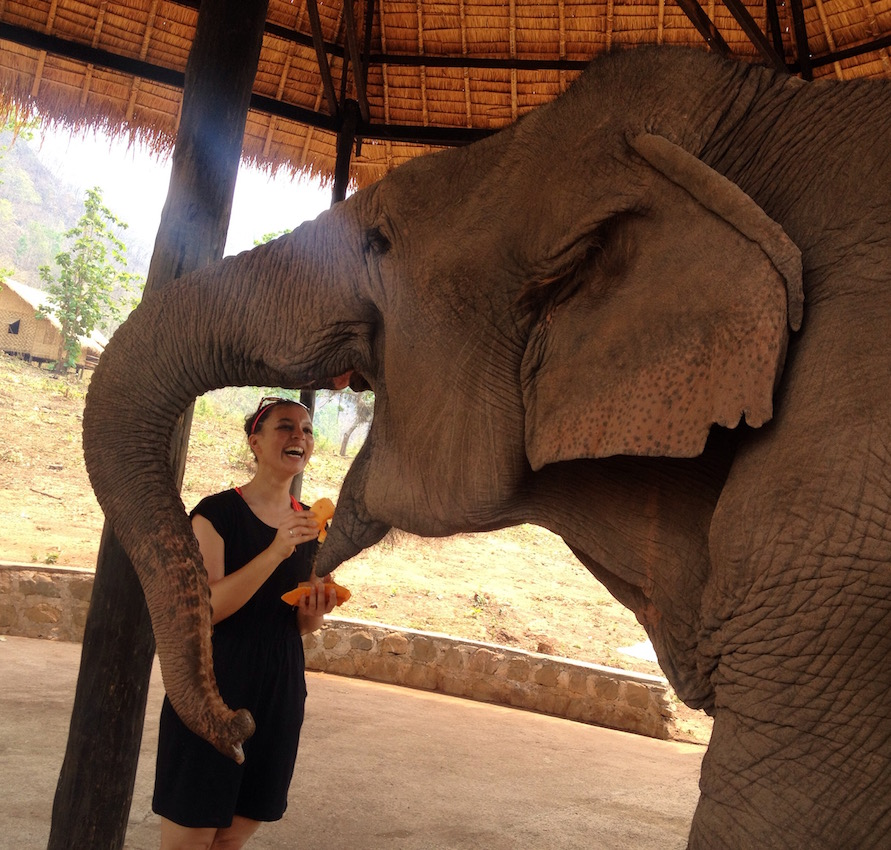 myanmar-feeding-elephant-ghv-sanctuary