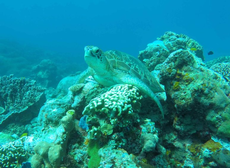 5-Reasons-To-Explore-Komodo-National-Park-Komodo-diving1