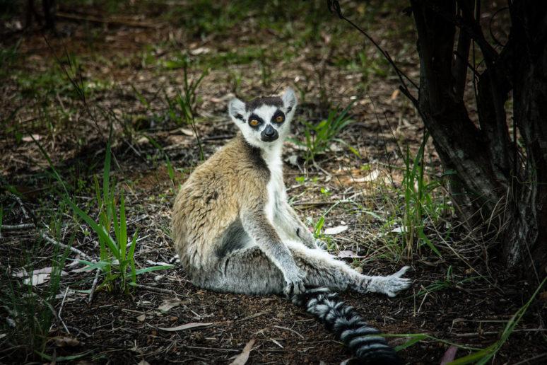 Madagascar-Lemur-Park