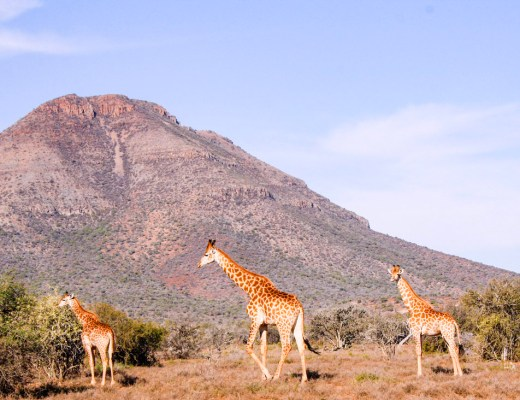 South African Safari in the Karoo, Eastern Cape