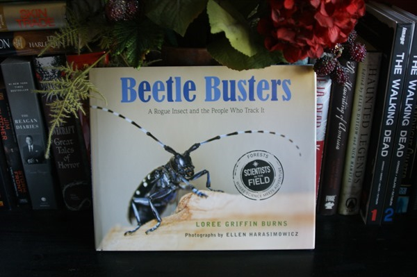 Beetle Busters (Scientists in the Field Series) by Loree Griffin Burns | wearewordnerds.com