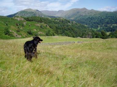 Bella up Loughrigg