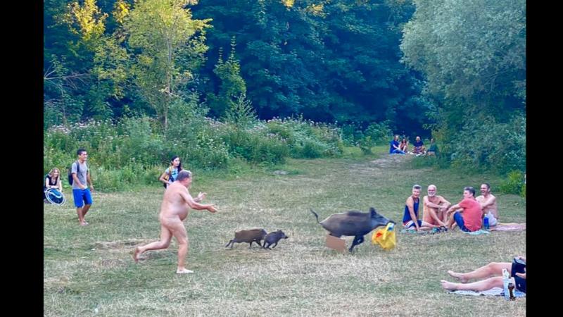 Wild swyn stealt voldreakener van düütsken nudist